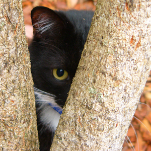 cat-hiding - Peek-a-boo! - Introduce Yourself